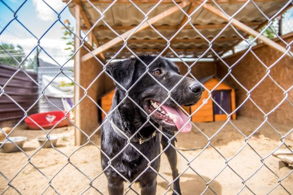 Psu na Budę 2018 [FOTO]